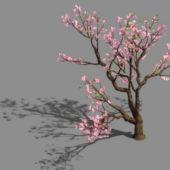 Pink Flower Peach Tree