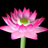 Nature Pink Lotus Flower