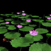 Pink Lotus Flowers Pond
