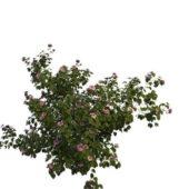Pink Flower Garden Bush