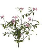 Nature Green Pink Flowering Herb