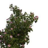 Nature Green Pink Flowering Shrubs