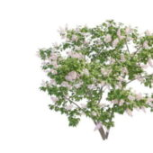 Pink Perfume Lilac Bushes Tree