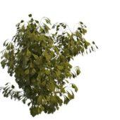 Nature Green Poplar Tree Branch