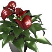Indoor Potted Anthurium