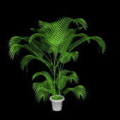 Indoor Potted Palm Plants