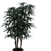 Indoor Potted Bamboo Plant
