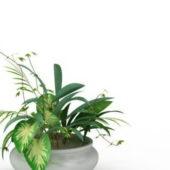 Potted Dieffenbachia Plant