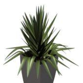 Indoor Potted Gladiolus White Pot