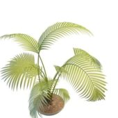 Potted Palm Green Tree Plants