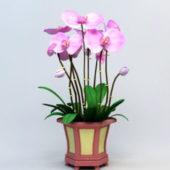 Potting Orchid Flower