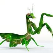 Praying Mantis Wild Animal