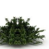 Nature Plant Privet Honeysuckle