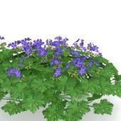 Green Purple Flowering Bushes