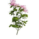 Nature Purple Flowering Plant