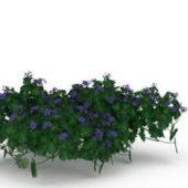 Purple Flowering Shrubs Green Tree