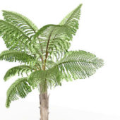 Queen Anne Garden Palm Tree