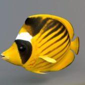 Animal Raccoon Butterfly Fish