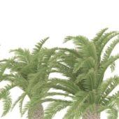 Nature Ravenea Rivularis