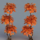 Red Japanese Maple Ree