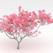 Nature Red Flowering Tree