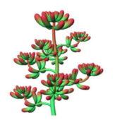 Red Sedum Flower
