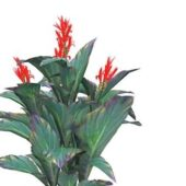 Red Canna Lily Flower Plants