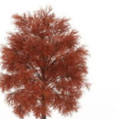 European Red Coniferous Tree