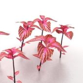 Garden Red Plants