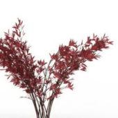 Red Photinia Shrub Plant