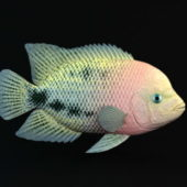 Redhead Cichlid Fish Animal