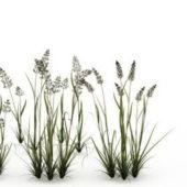 Garden Reed Grass