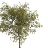 Green Rowan Tree
