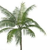 Tropical Royal Palm Tree