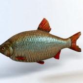 Animal Rudd Fish