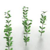 Green Sapling Tree