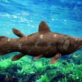 Animal Lobe Finned Fish