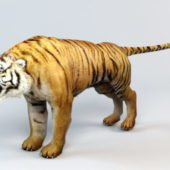 Asia Tiger Animal