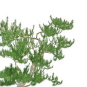 Nature Tree Scrub Mountain Pine
