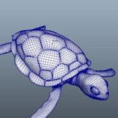 Sea Tortoise Animal