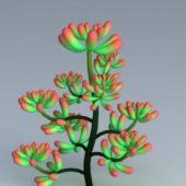 Plant Pachyphyllum