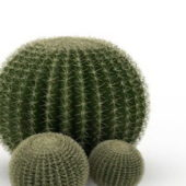 Silver Ball Cactus Plant