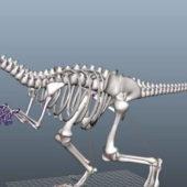 Skeleton Dinosaur Animal Rigged