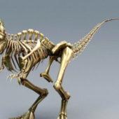 Skeletal T-rex Bones