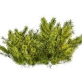 Nature Small Coniferous Shrubs