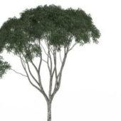 Small Kapok Green Tree