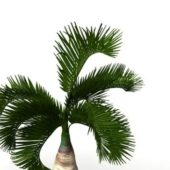 Garden Small Palm Tree