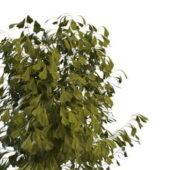 Small Green Tree Bush