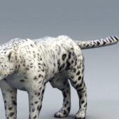Snow Leopard Wild Animal