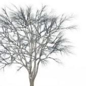 European Snow Ginkgo Tree